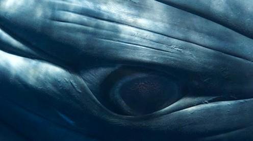 Jak wykonać zdjęcie wieloryba wjego naturalnej wielkości (wideo)