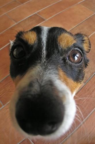 Psi węch zastąpiony przez elektroniczny nos